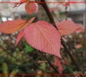 柳绿樱红芳菲季