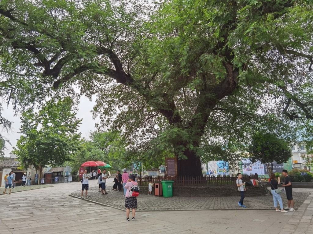 图22:村口大树02.jpg