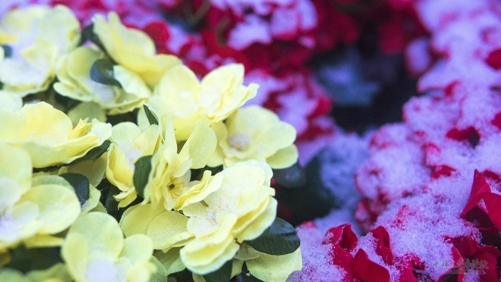 千库网_自然景观之雪后的花朵_摄影图编号3031.JPG