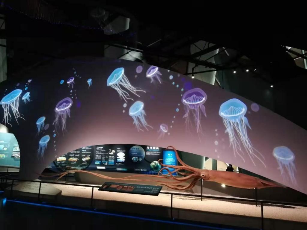 水母世界.jpg