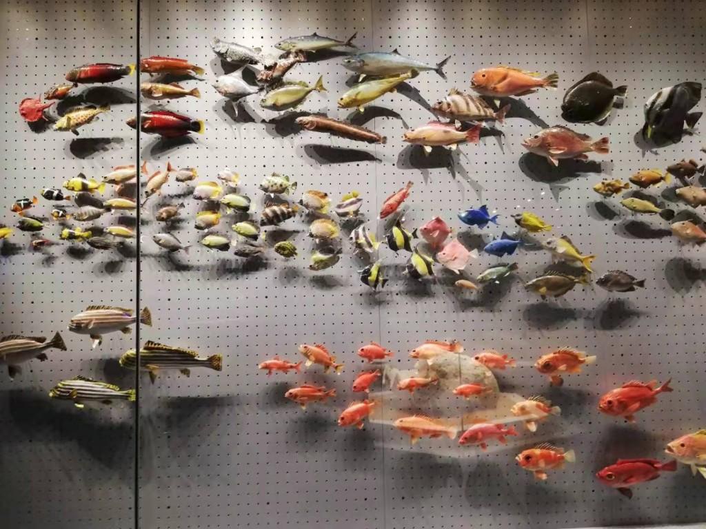 鱼的海洋.jpg