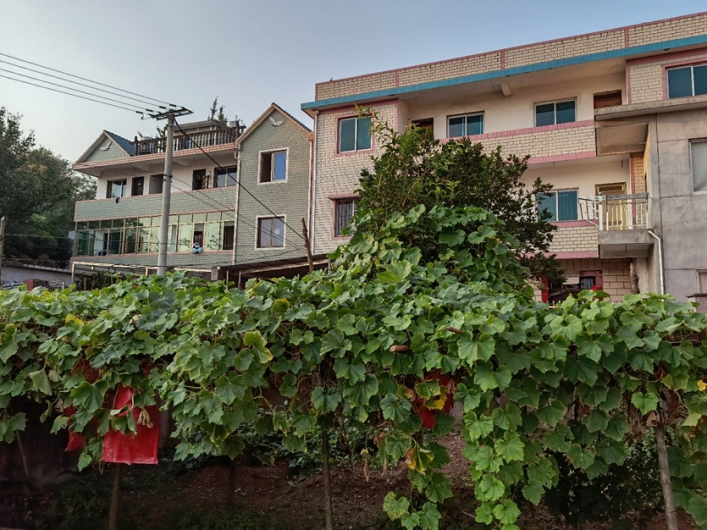 种冬瓜和南瓜